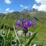 Vallée d'Ossau - Ur eta Lur, Canyoning et Randonnée